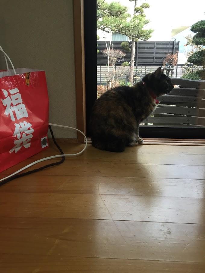 ねこ店長ノラクロプジョーIMG_2558.JPG