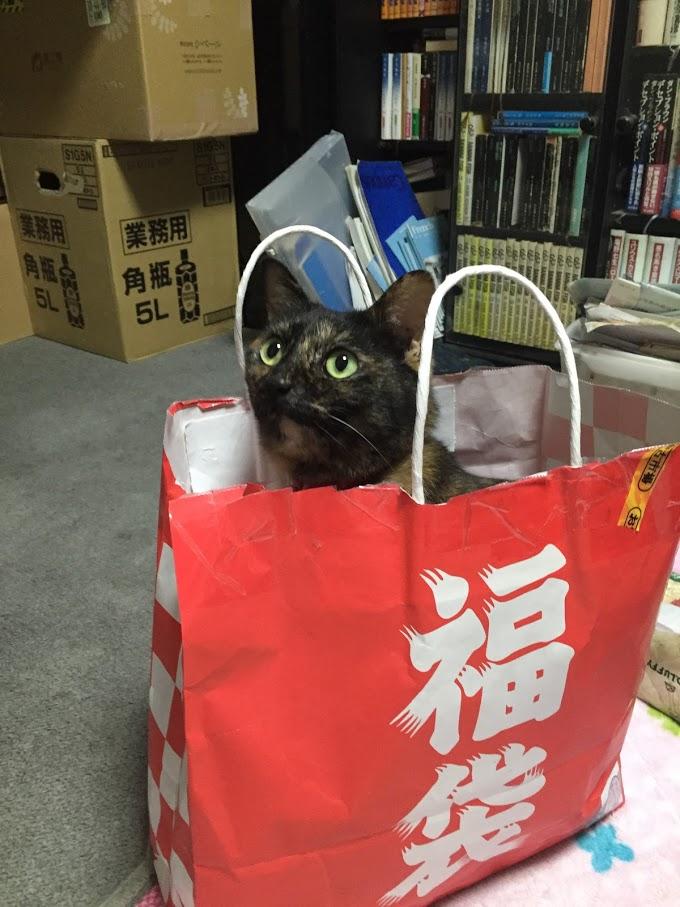 ねこ店長ノラクロプジョーIMG_2568.JPG